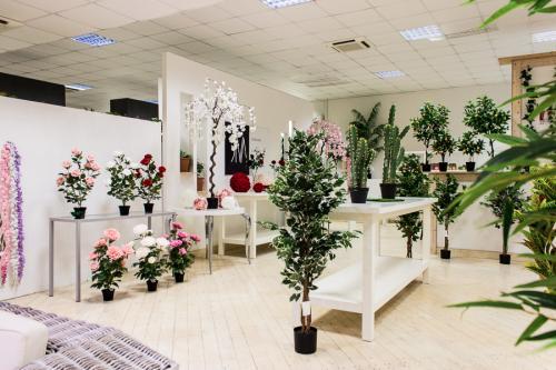 Diva2018 051 Showroom